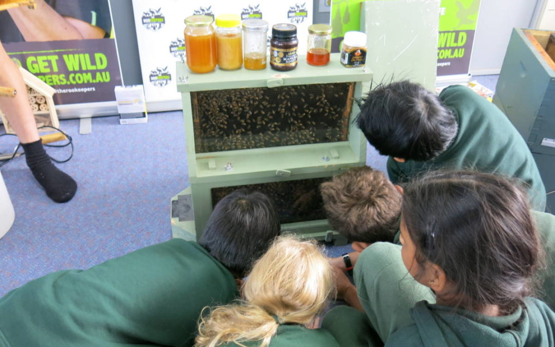 BUSY BEES INCURSION YEAR 3's
